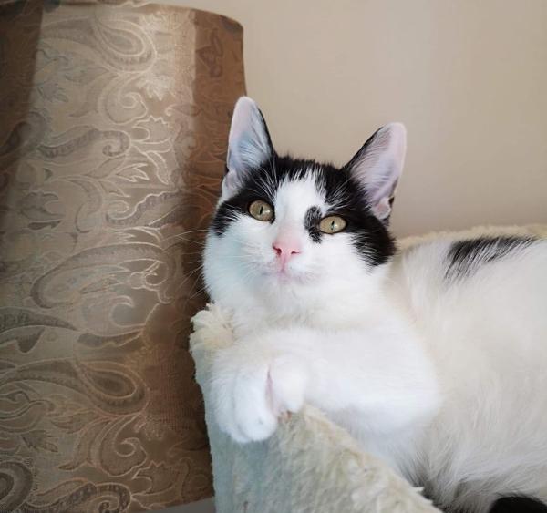 refuge adoption chats de qu bec les pattes jaunes les pattes jaunes. Black Bedroom Furniture Sets. Home Design Ideas