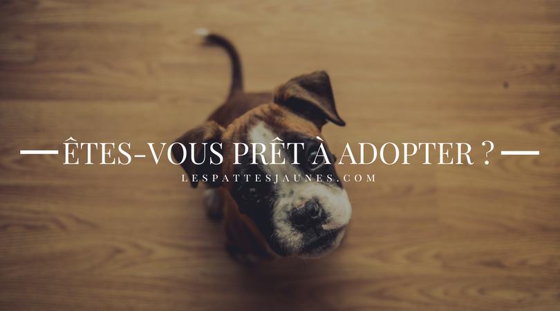 Image Êtes-vous prêt à adopter?