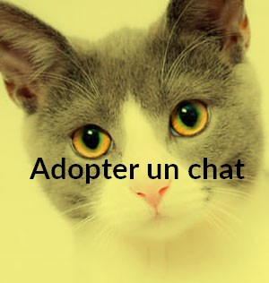 Adopter un chat