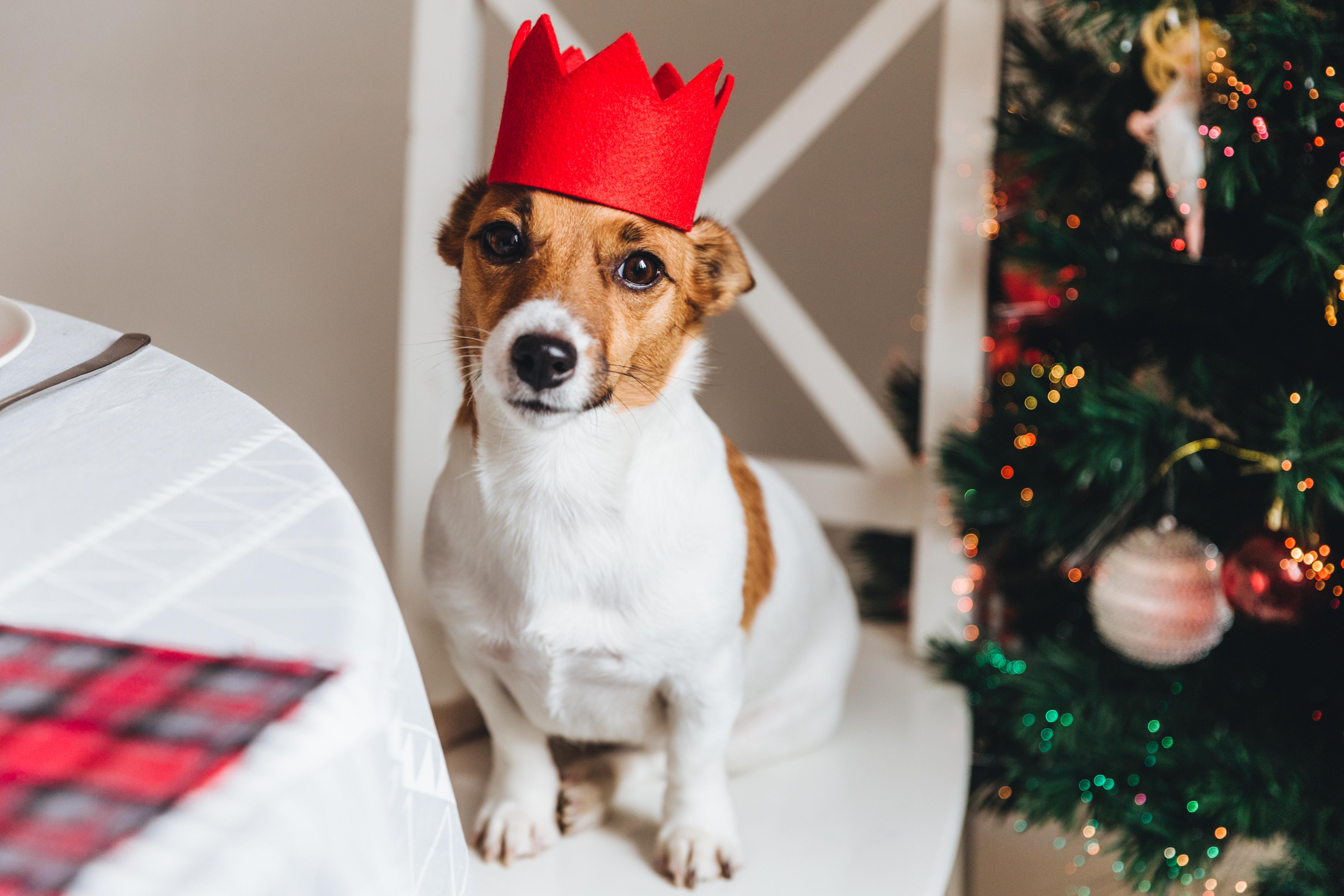 Image Les chiens et la visite en ce temps des fêtes!