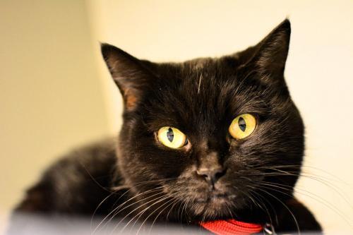belle chatte noire douce amateur arabe sexe gay