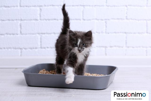 Image Comment choisir la bonne litière pour mon chat ?