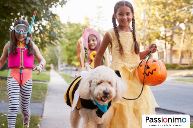 Image Passer l'Halloween avec son chien? 5 questions-clés à se poser