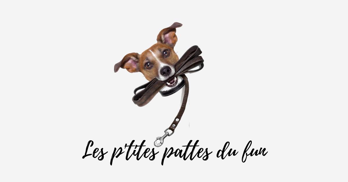 Image Consultation privée en comportement canin
