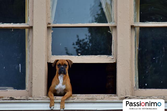 Image Déconfinement : 3 trucs pour faciliter le retour à la routine pour votre chien