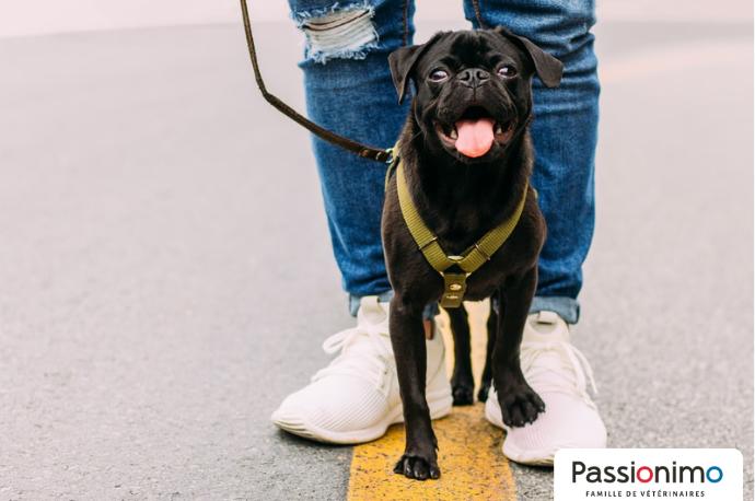 Image Coup de chaleur chez le chien : le reconnaître et l'éviter