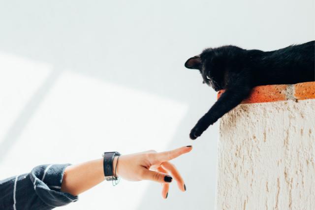 Image Parlez-vous le langage chat?